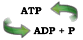 ATP ADP conversion